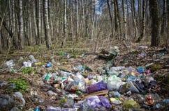 Primavera en el bosque ruso Fotos de archivo libres de regalías