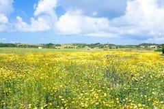 Primavera en el campo Fotos de archivo