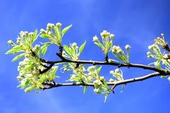 Primavera en el distrito residencial de Karoliniskes de la ciudad de Vilna Imagen de archivo libre de regalías