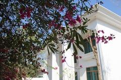 Primavera en el hogar Foto de archivo