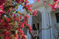 Primavera en el hogar Fotos de archivo
