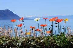 Primavera en el lago geneva, Montreux, Suiza Fotografía de archivo
