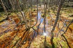 Primavera en el pantano Imagenes de archivo