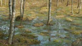 Primavera en el pantano metrajes