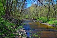 Primavera en el pequeño río del bosque Fotos de archivo