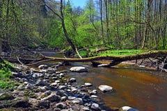 Primavera en el pequeño río del bosque Imagen de archivo libre de regalías