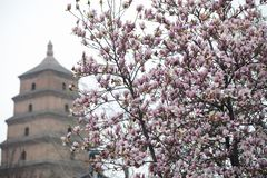 Primavera en el punto escénico de la pagoda de Dayan, ciudad de Xi'an, provincia de Shaanxi, China imagen de archivo
