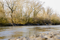 Primavera en el río del bosque imagenes de archivo