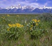 Primavera en el Tetons magn?fico foto de archivo