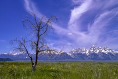 Primavera en el Tetons magn?fico imágenes de archivo libres de regalías