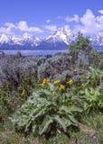 Primavera en el Tetons magn?fico imagen de archivo
