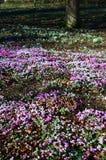 Primavera en Inglaterra Foto de archivo libre de regalías