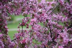 Primavera en Iowa Imagen de archivo libre de regalías