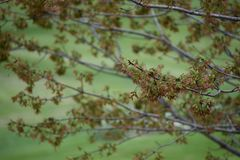 Primavera en Iowa Foto de archivo libre de regalías