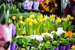 Primavera en la ciudad Foto de archivo