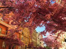 Primavera en la ciudad de Praga Foto de archivo