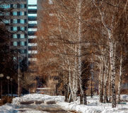 Primavera en la ciudad grande Fotografía de archivo libre de regalías