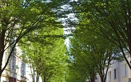 Primavera en la ciudad imagen de archivo libre de regalías