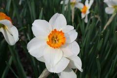 Primavera en la floración 2019 IX fotos de archivo libres de regalías