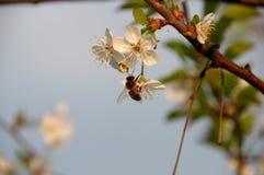 Primavera en la huerta. Imágenes de archivo libres de regalías