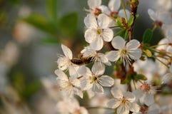 Primavera en la huerta. Fotos de archivo
