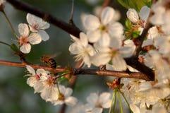Primavera en la huerta. Fotografía de archivo