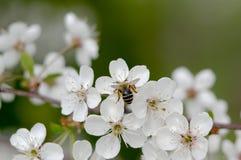 Primavera en la huerta. Fotografía de archivo libre de regalías