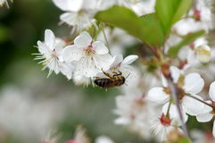 Primavera en la huerta. Imagen de archivo