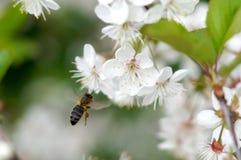 Primavera en la huerta. Fotos de archivo libres de regalías