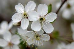 Primavera en la huerta. Foto de archivo