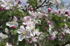 Primavera en la huerta Imagen de archivo libre de regalías