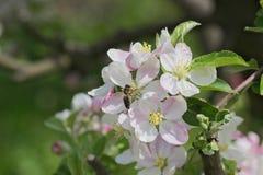 Primavera en la huerta Imagen de archivo