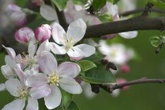 Primavera en la huerta Imagenes de archivo