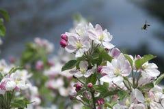 Primavera en la huerta Foto de archivo libre de regalías