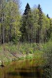 Primavera en la orilla del río Imagenes de archivo