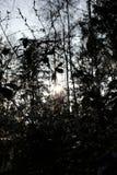 Primavera en la oscuridad imagen de archivo