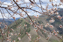 Primavera en las montañas Foto de archivo libre de regalías