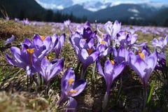 Primavera en las montañas de Tatra imagenes de archivo