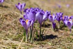 Primavera en las montañas de Tatra fotografía de archivo