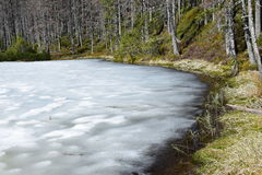 Primavera en las montañas de Tatra imagen de archivo