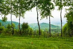 Primavera en montañas Abedules verdes Imagen de archivo libre de regalías