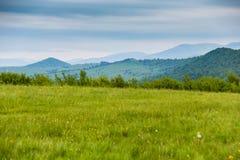 Primavera en montañas Campo de las flores del resorte Fotos de archivo