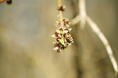 Primavera en naturaleza Fotografía de archivo