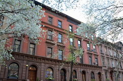 Primavera en New York City, los E.E.U.U. imagen de archivo