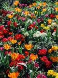 Primavera en París Imagen de archivo