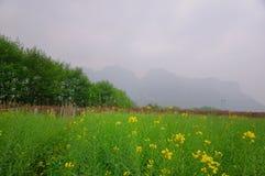 Primavera en Pingjiang Imagen de archivo