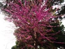 Primavera en Pompeya, Italia Imagen de archivo libre de regalías