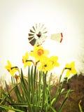 Primavera en Tejas Foto de archivo libre de regalías