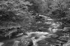 Primavera en Tremont en el parque nacional de Great Smoky Mountains, TN LOS E Imágenes de archivo libres de regalías