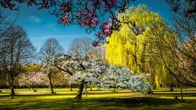 Primavera en un parkland ingl?s imagenes de archivo